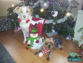 To byly první Vánoce, kdy nám přibyl novej člen rodiny :-) (Nelča)