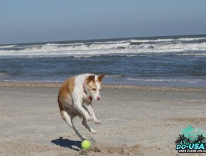 Takhle řádí pravidelně na pláži :-)