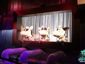 To jsou ty zpívající krávy :D :D